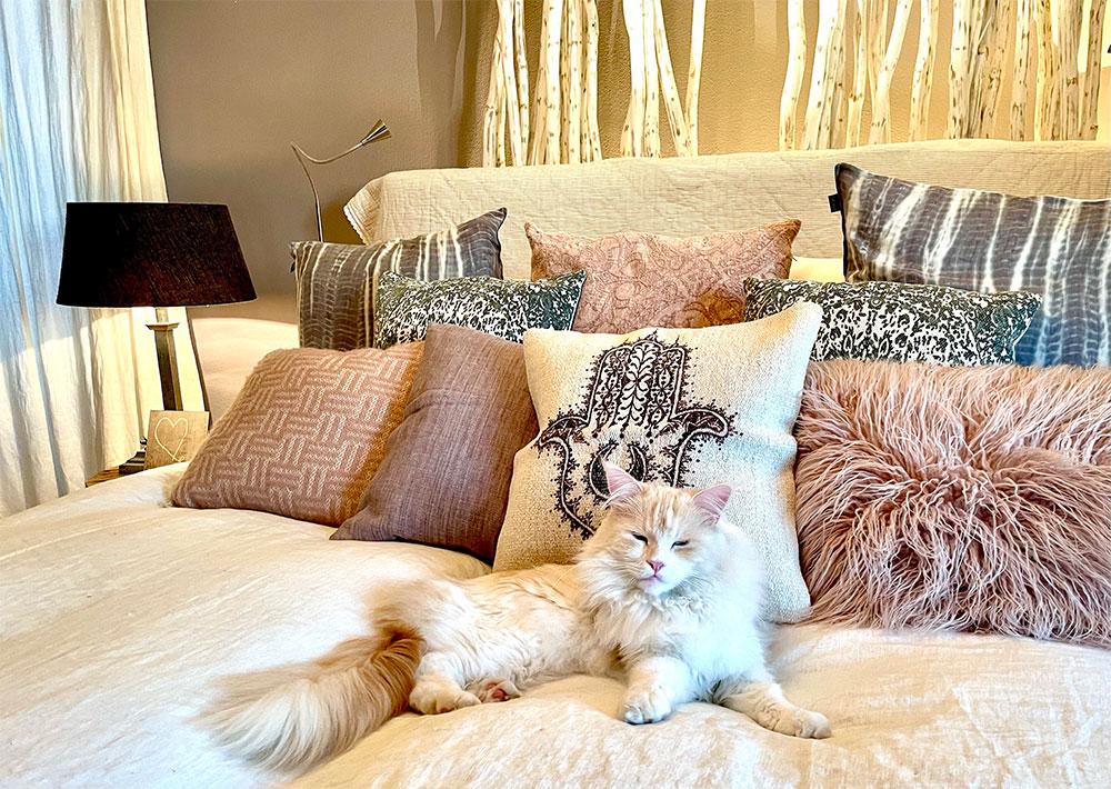 Kissen und Katze